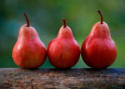 Frutas 10