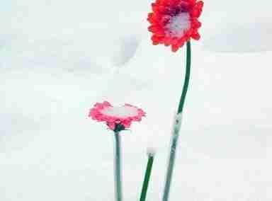 Invierno 06