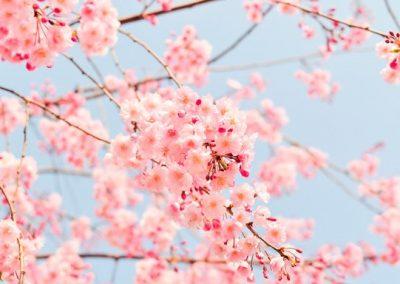 Primavera 01