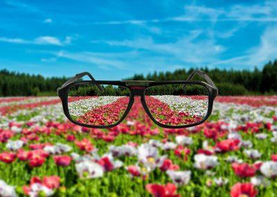 Flores 10