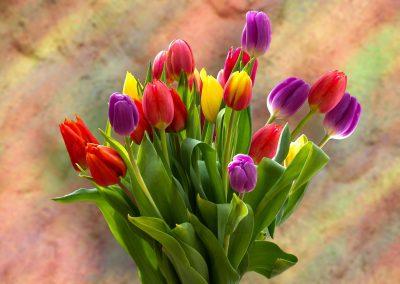 Flores 24
