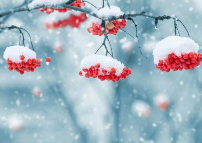 Invierno 11