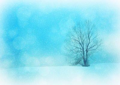 Invierno 14