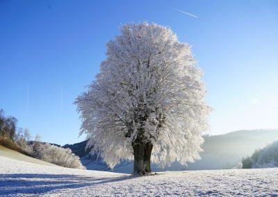 Invierno 15
