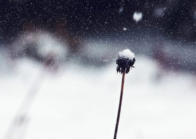 Invierno 21