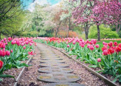 Primavera 24